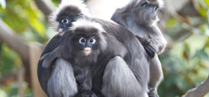Zoos Don't Monkey Around with DR: Veeam Ensures High Availability